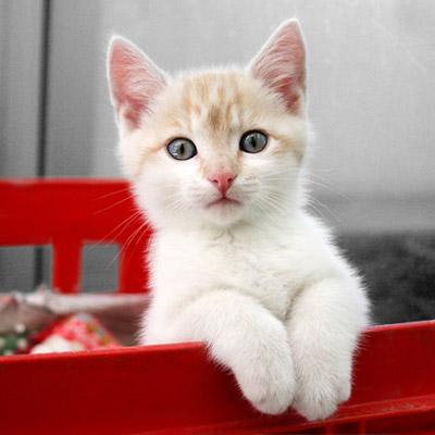 cat insurance plans   pet cat health insurance