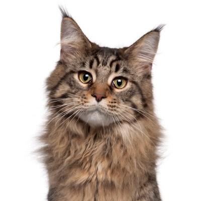 Cat Insurance Plans   ASPCA® Pet Health Insurance