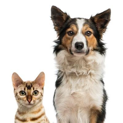 Compare Aspca Pet Insurance Vs Nationwide