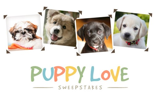 PuppySweepstakes14blog-post.jpg