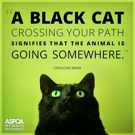 black-cat-web11172014.jpg