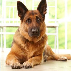 For Brokers – ASPCA Pet Health Insurance