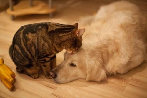 Blog Pets Amp Cancer