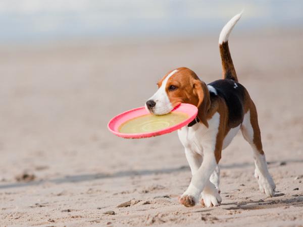 dog_travel_tips.jpg