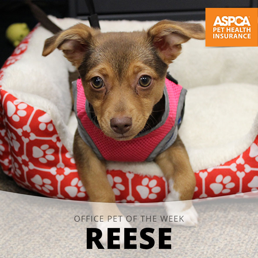 Reese.jpg