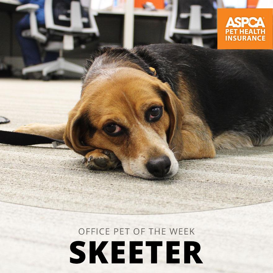 Office Pet of the Week: Skeeter