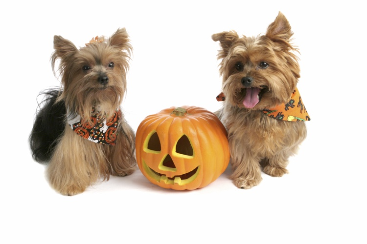 Halloween Pet Safety Tips.jpg