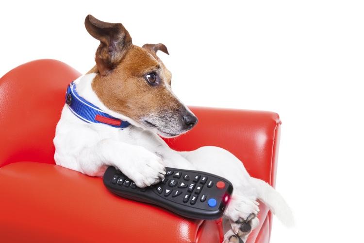 Should Your Pet Watch TV.jpg