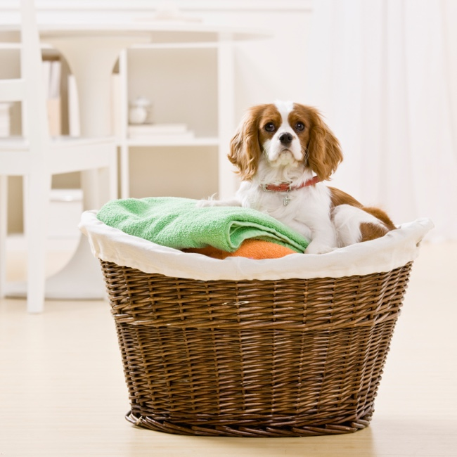 23 Tips for a Clean and Pet Friendly Home .jpg