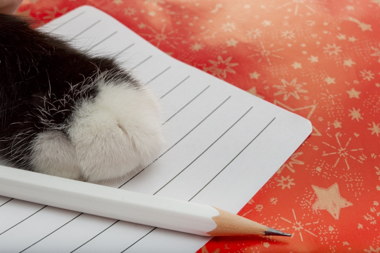 8 Pet-Worthy New Year's Resolutions