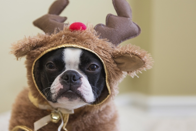 7 Ways to Celebrate the Holiday with Pets.jpg