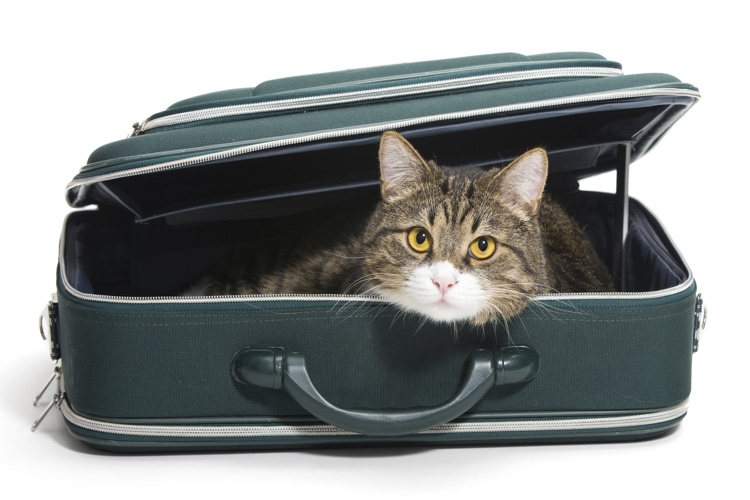 Pet-Friendly Holiday Travel Tips.jpg