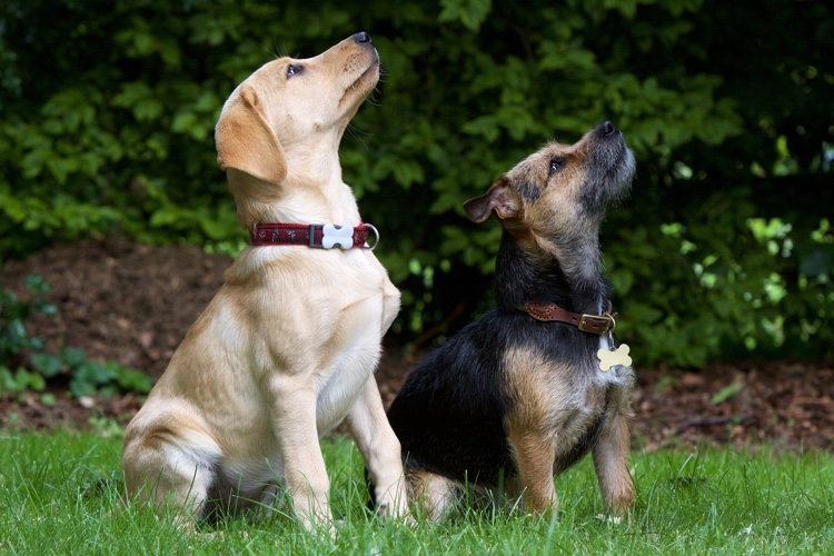 5 Fun Tricks To Teach Your Dog  Easy Obedience Training