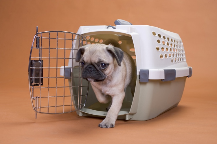 How To Re Crate Train A Dog