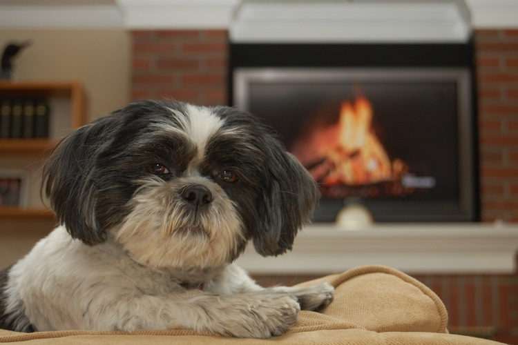 Fireplace Safety Tips For Your Pet