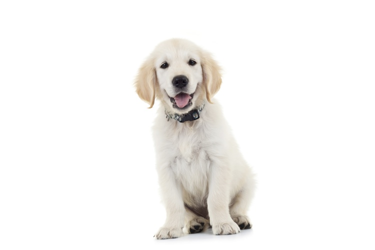 How To Train A Puppy Clicker Training