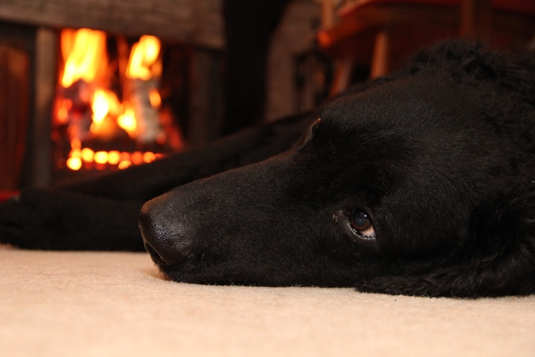 Keep dogs safe around fire