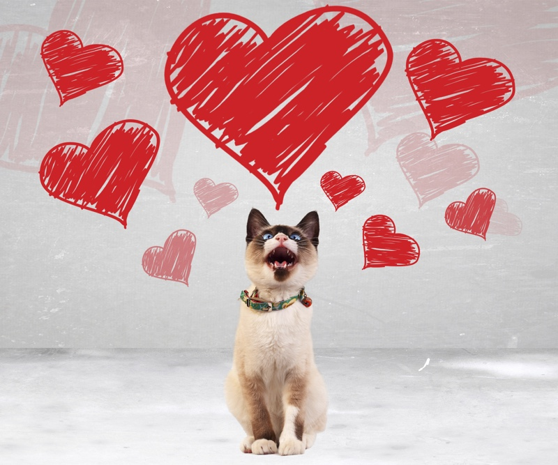 Pet Friendly Valentines Day Pet Safety