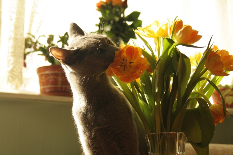 cat smelling flowers cat allergies