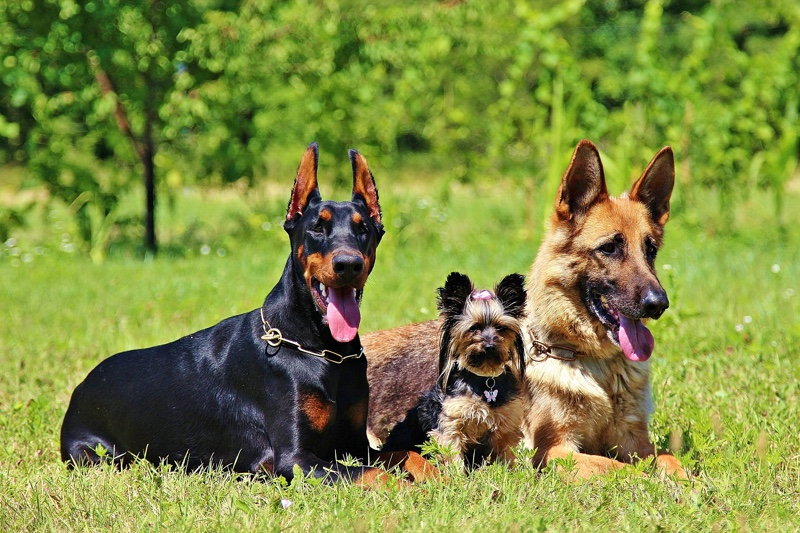 Heartworm risk factors for dogs