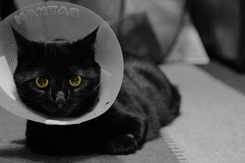 black cat in a cone