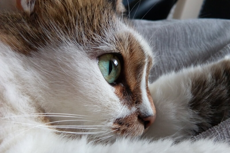 Preventing upper respiratory infections in cats