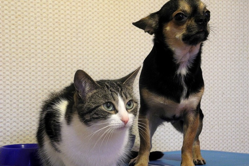 Top pet insurance claims for puppies and kittens