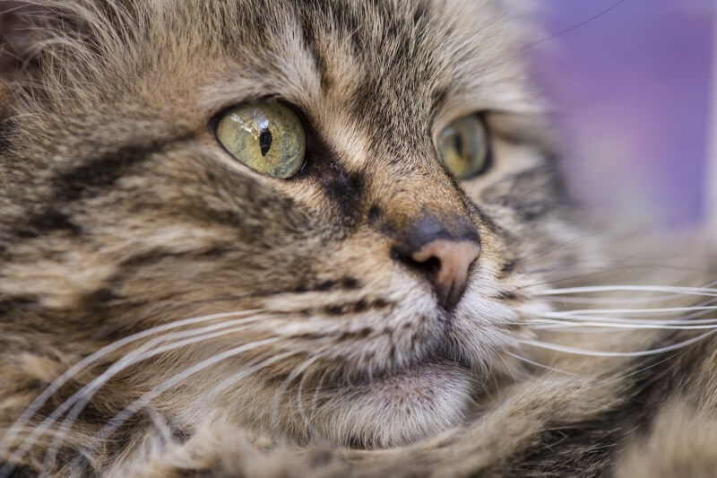 Feline Leukemia _ Causes, Vaccine, and Symptoms.jpg