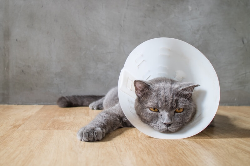 Top 5 Cat Injuries.jpg