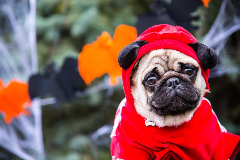 Halloween Safety Tips for Pets-min.jpg